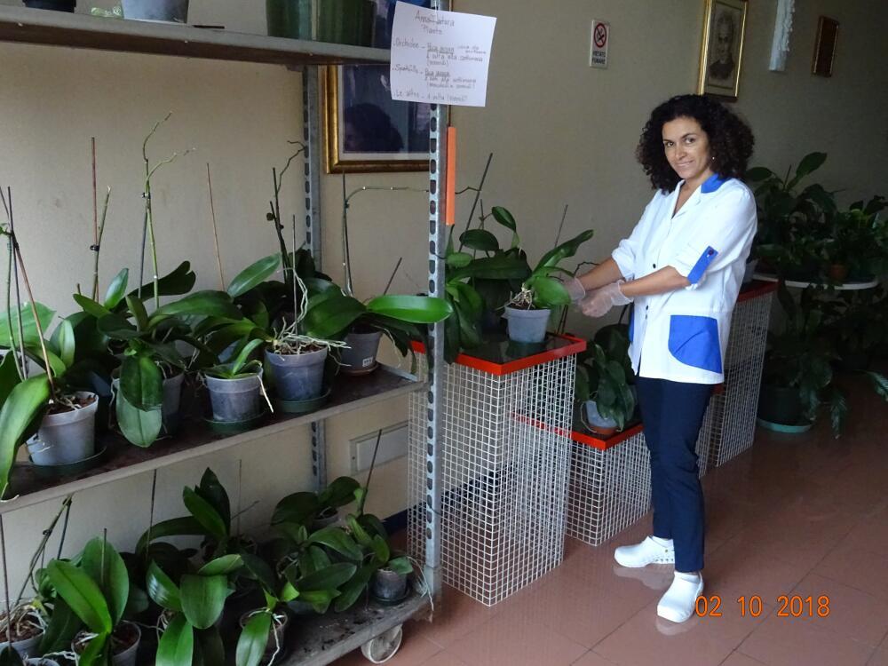 La serra, reparto Orchidee